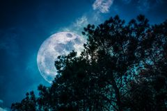 Silhouette of trees against sky and super moon over serenity nature background stock photos