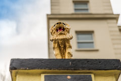 View from below on a gold lion on a pedestal in front of the gat Royalty Free Stock Photo