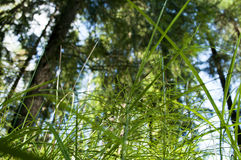View from below on Green forest. Royalty Free Stock Photos