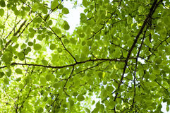 View from below on Green forest. Stock Image