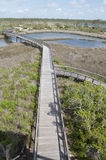A view of Big Lagoon State Park along the boardwalk. Boardwalk overlooking Big Lagoon in Pensacola, Florida stock photography