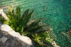 View of big palm tree growing on sea coast Stock Image