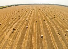 View from a bird`s eye view on a field with stacked bales of wheat Stock Photos
