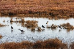 View of birds in Evros river, Greece. Royalty Free Stock Photography