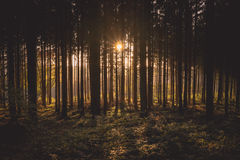 View of Black Trees and Sun Royalty Free Stock Images