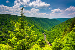 View of Blackwater Canyon from Pendleton Point, at Blackwater Fa Royalty Free Stock Images