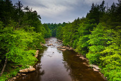 View of the Blackwater River from a bridge at Blackwater Falls S Royalty Free Stock Images