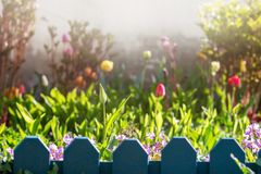 View of blooming tulips and flowers in soft sunlight with fog in the background. Beautiful fabulous view of blooming tulips and flowers in soft sunlight with fog stock images