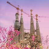View from the blossom trees at Sagrada Familia at spring time. royalty free stock photo