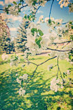 View on blossoming branches of appletree instagram stile Royalty Free Stock Photography