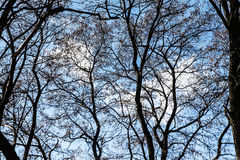 View of the blue bright cloudy sky through the branches Stock Photos