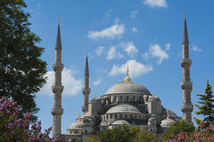 View of the Blue Mosque in Istanbul Royalty Free Stock Photography
