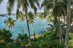 View of the blue ocean thrugh verdant grove of coconut trees Stock Photo