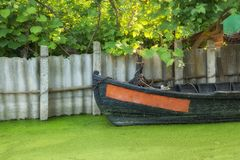 View of the boat near the canal shore and duckweed on the water. Vilkovo, Ukraine royalty free stock images