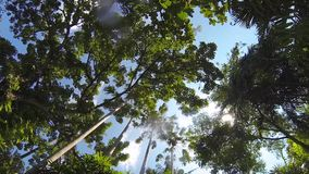 View from boat to blue sky and tropical forest with sun rays shining thru green leaves. GoPro HD. Thailand stock footage