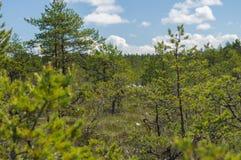 View through bog area thicket. Under blue sky stock photos