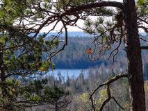 View of Boundary Waters Lakes with Pine in Foreground Royalty Free Stock Photos