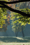 View through a branch. At misty sunrays and enlightened trees royalty free stock images