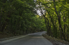 View of branch with bright summer green color leaves with blurred forest and the blue sky on background. Mountain road in Lahic Bi Stock Image