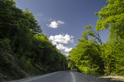 View of branch with bright summer green color leaves with blurred forest and the blue sky on background. Mountain road in Lahic Bi Stock Photos