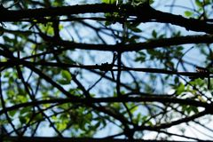 The branches. A view of the branches and not really visible barbwire Royalty Free Stock Images
