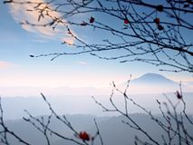 View through branches over deep misty valley within daybreak. Foggy and misty morning Stock Image
