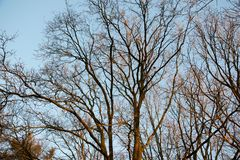 View on branches rising in the blue sky in fresenburg emsland germany. And photographed on end during a walk in the nature on a sunny late afternoon royalty free stock photography