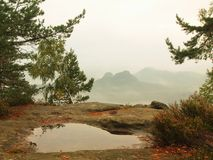 View through branches to deep misty valley within daybreak. Foggy and misty morning on the sandstone view point. In national park Saxony Switzerland in Germany Royalty Free Stock Image