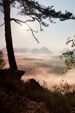 View through branches to deep misty valley within daybreak. Foggy and misty morning on the sandstone view point in national park Royalty Free Stock Images