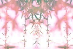View of the branches of a willow on a white background with pink blur.  stock image