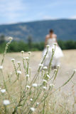 View of Bride through the grass. View through the grasses of a Bride walking on a gravel road Stock Photography