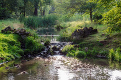 View from the bridge over the floating ducks in the brook. Photo in summer. View from the bridge over floating ducks in the brook. Photo in summer Stock Image
