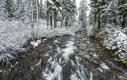 View on the bridge,scenic view of Narada falls on snow day in mt Rainier,Washington,usa. Royalty Free Stock Photo