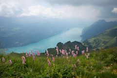 View from brienzer rothorn mountain to lake brienzersee, bernese royalty free stock photo