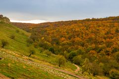 View of a bright autumn orange forest from a hill on a cloudy da royalty free stock photos