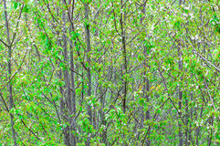 View on bright green tree crowns Royalty Free Stock Photos