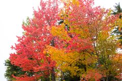 Fall colors in North America. A view of the brilliant and eclectic colors that take over the entire Adirondacks region in New York state of USA during the peak royalty free stock photos