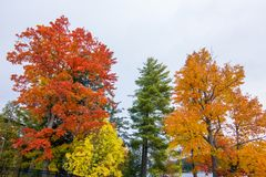Fall colors in North America. A view of the brilliant and eclectic colors that take over the entire Adirondacks region in New York state of USA during the peak royalty free stock photography