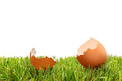 A view of a broken egg on a green grass Royalty Free Stock Images