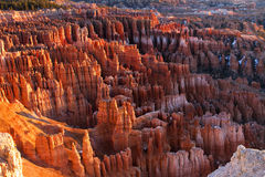 View in Bryce Canyon National Park. Morning view in Bryce Canyon National Park in Utah Royalty Free Stock Image