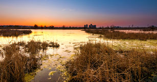 View of Bucharest from Vacaresti delta Stock Photo