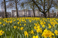 View of Buckingham Palace from Green Park in London Stock Image