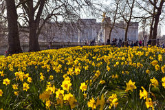 View of Buckingham Palace from St. James's Park Stock Photos
