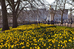 View of Buckingham Palace from St. James's Park Royalty Free Stock Photography