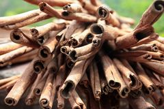 View of a bunch of cinnamon spice Royalty Free Stock Photo