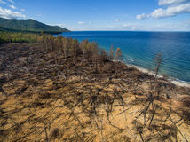 View of a burned forest Stock Photo