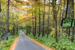 View from the bus on the road and the yellow forest tree in autu Stock Image