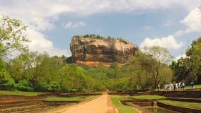 View of butterflies in park below Sigiriya rock in Sri Lanka stock video