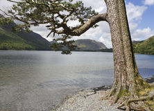 View of Buttermere. View of Lake Buttermere, English Lake District. Cumbria, England, UK royalty free stock photo