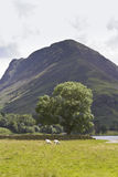View of Buttermere. Royalty Free Stock Photos